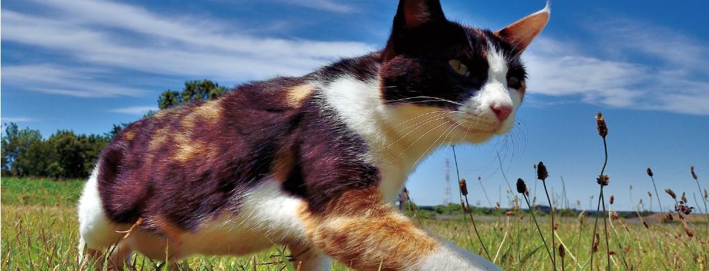野原を歩く猫