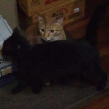 我が家のラブラブ猫