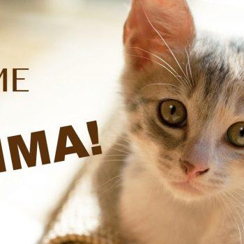 【どうぶつ基金】待ちに待った初めての子猫!