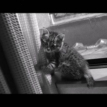 保護猫「たまも」の成長