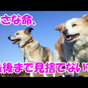 保護犬トミーとメイコ~小さな命、最後まで見捨てないで~