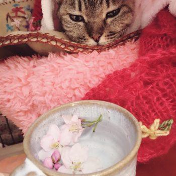 どうしても桜を見せたくって…