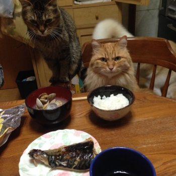 夕飯〜いつ食べていいですか?〜